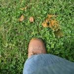 nie chodź po trawie