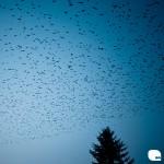 ptaki nad drzewem